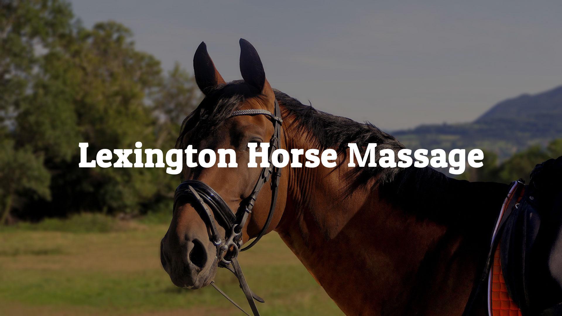 Lexington Horse Massage | Healing Hands